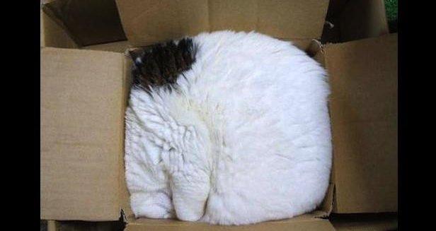 Коробка - необходимая вещь в кошачьей квартире