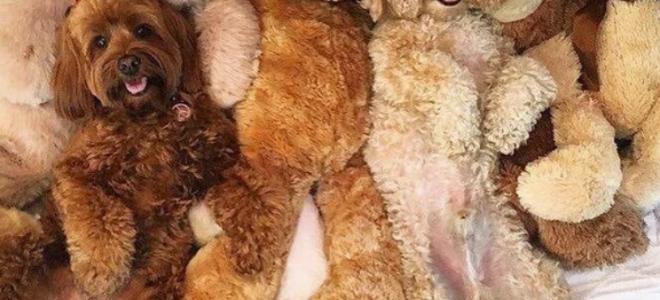 25 фото собак, мастеров камуфляжа