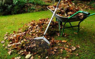 Весенняя уборка в саду — полное руководство