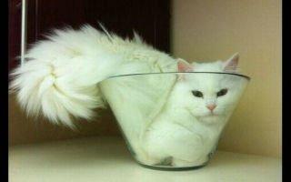 20 кошек в труднодоступных местах