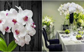 Как выращивать орхидеи, чтобы они цвели как сумасшедшие?