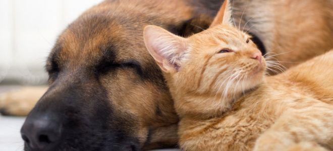 Животные в квартире: как убрать шерсть?