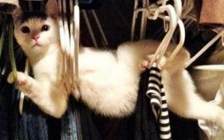 Мебель против котиков