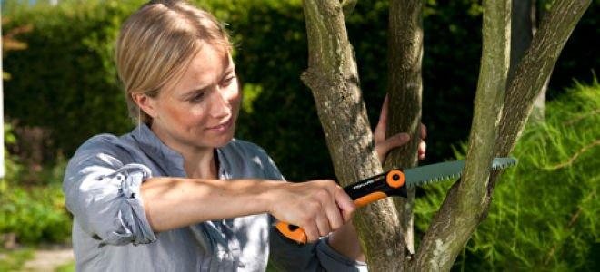 Обрезка фруктовых деревьев — когда и как подрезать?