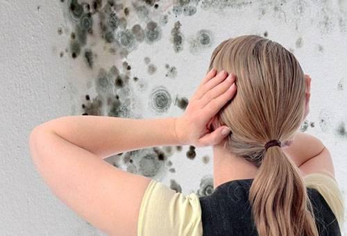 Как избавиться от плесени? Домашние методы и фунгициды