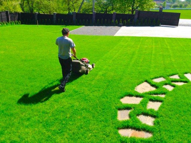 Когда и как следует проводить стрижку газонов?