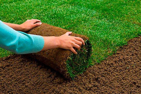 Трава из рулона – как ее уложить? Советы и хитрости