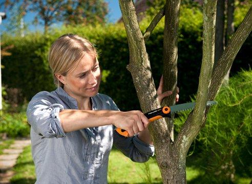 Обрезка фруктовых деревьев – когда и как подрезать?