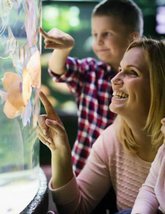 Что следует помнить при выборе освещения для аквариума?