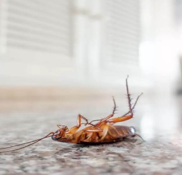 Тараканы в доме. Откуда они берутся и как с ними бороться?