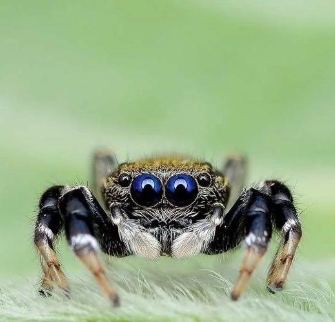 Пауки в доме. Как избавиться от пауков?