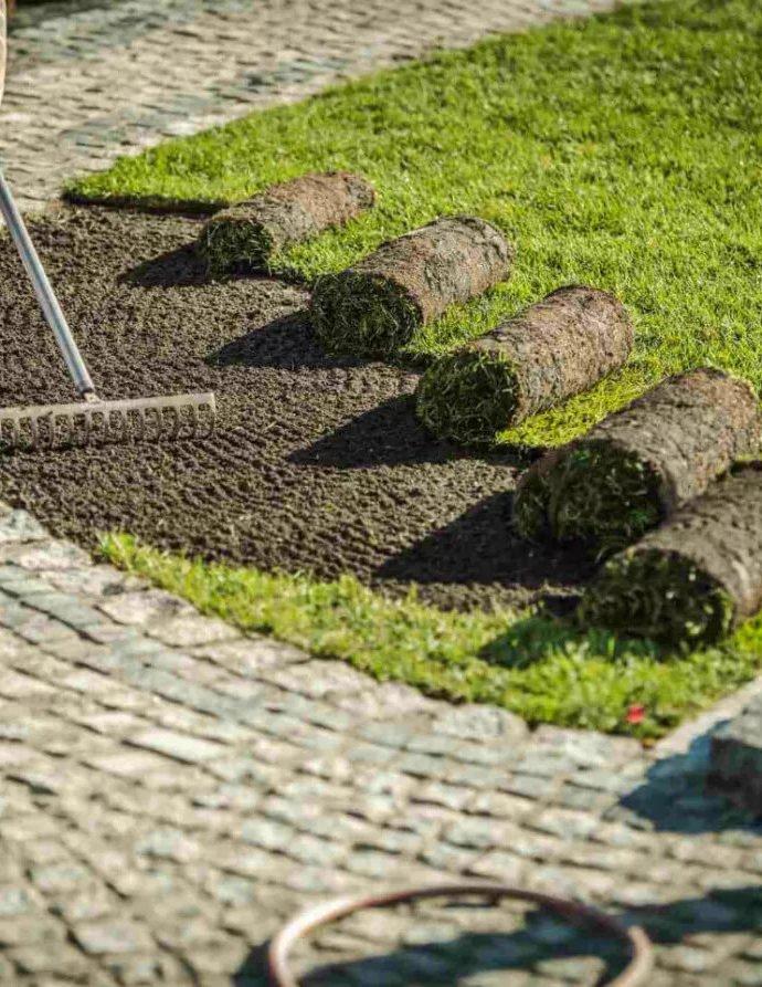 Как вырастить газон. Какую траву и когда сажать?